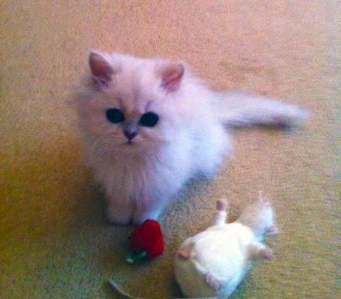 Sofia Ava with ratty